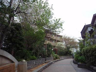 烏山川緑道2