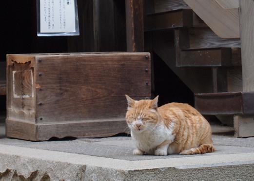 深大寺のネコ