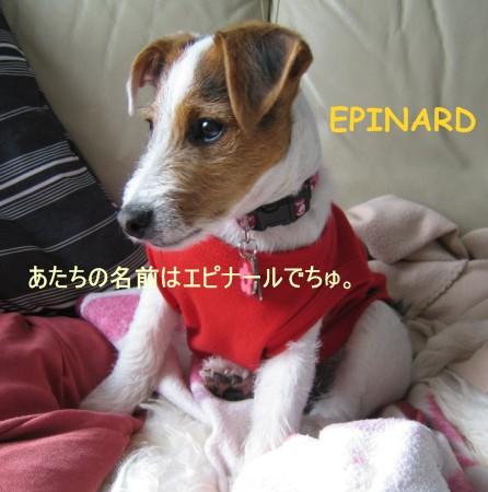 epinard0101.jpg