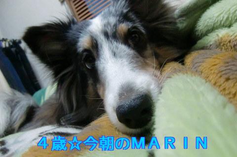 4歳になったMARINさん