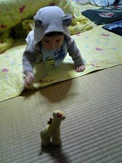 キリンを狙う王子