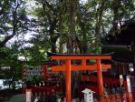 下鴨神社ご神木