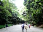 菖蒲の明治神宮2
