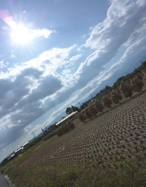 福島の秋の田んぼ