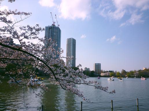不忍池の桜・3(2010年4月)