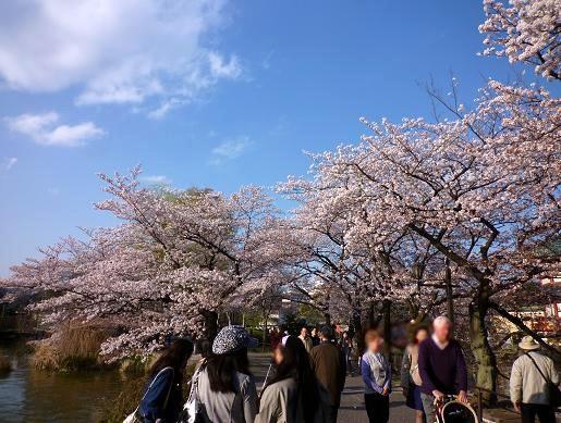 不忍池の桜・4(2010年4月)