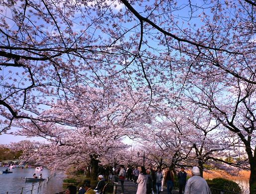 不忍池の桜・2(2010年4月)