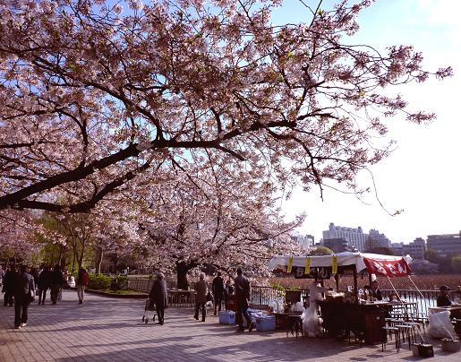 不忍池の桜・5(2010年4月)