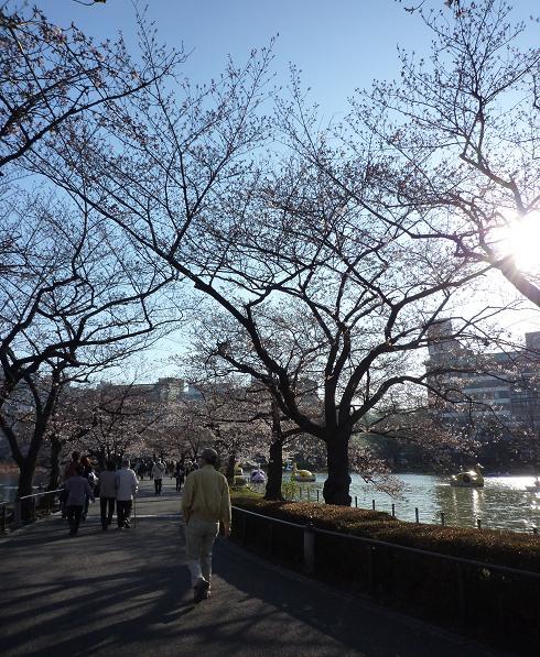 上野公園(20110405)-2