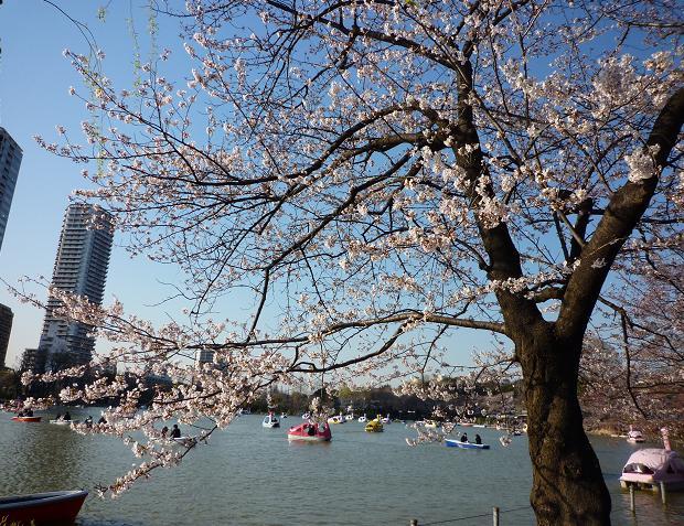 上野公園(20110405)-4