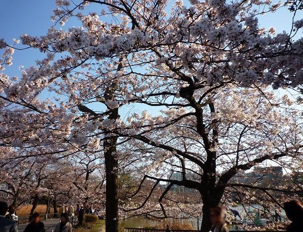 上野公園(20110405)-6