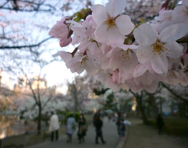 上野公園(20110405)-1
