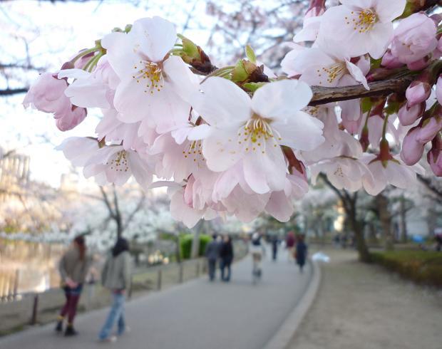 上野公園(20110405)-11