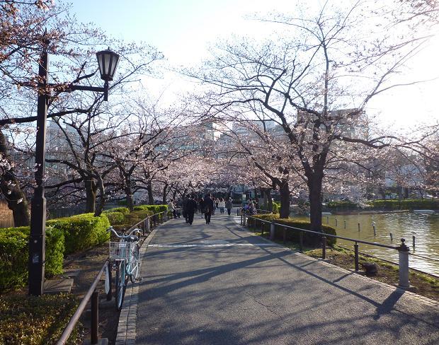上野公園(20110405)-10