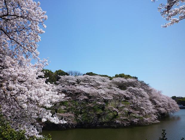 千鳥ケ淵(20110412)4