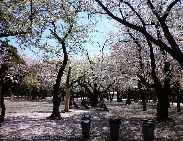 靖国神社(20110412)