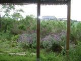 DSCF0014_20100523092203.jpg