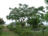 DSCF0023_20100523093313.jpg