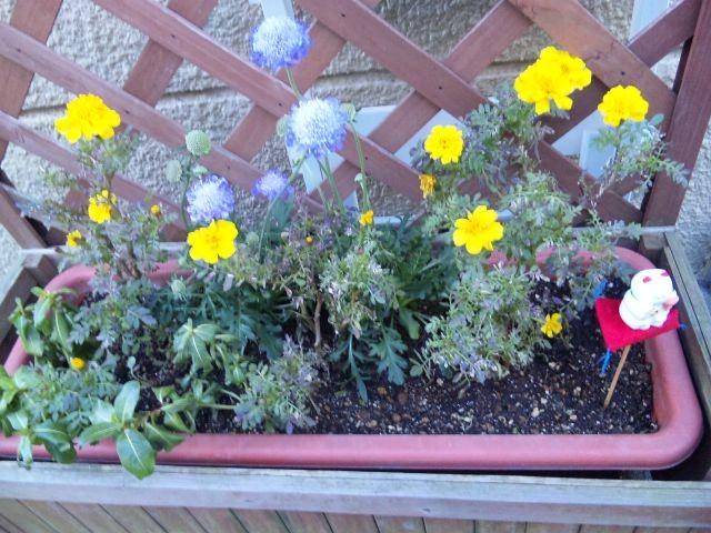 お隣りさんちの花