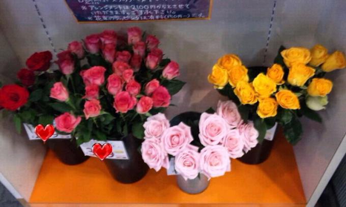 薔薇_20101214