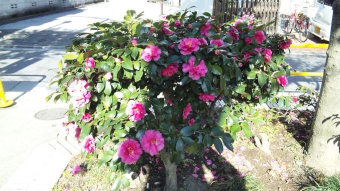 Flower_20101215