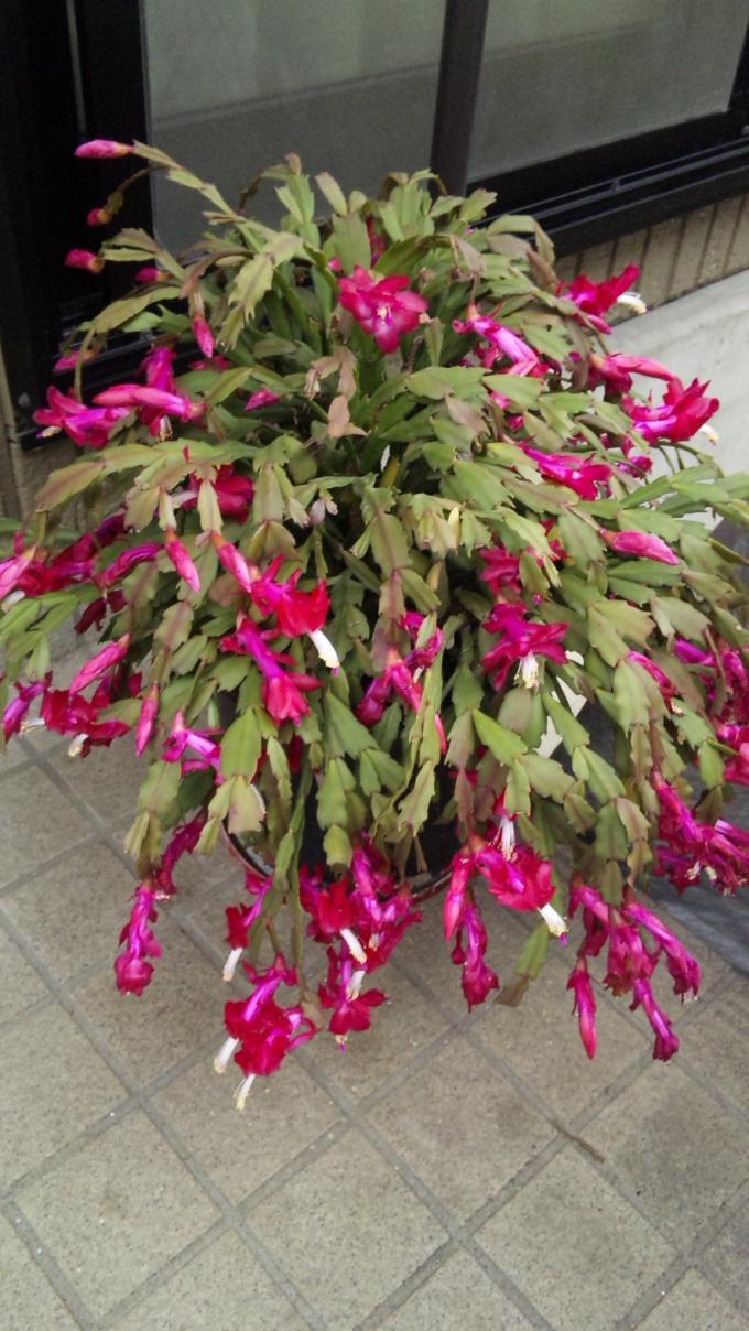 Flower_20101216