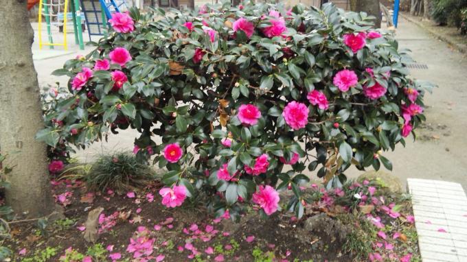Flowers_20101216