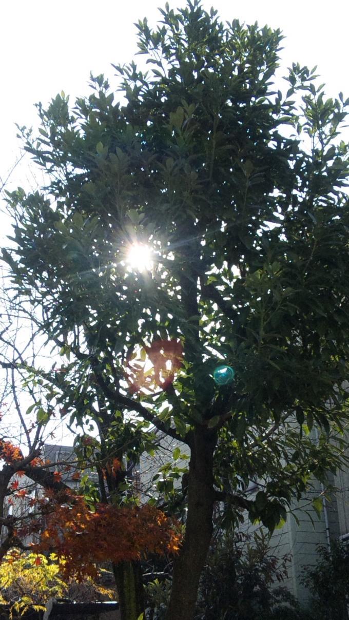 木漏れ陽_20101222