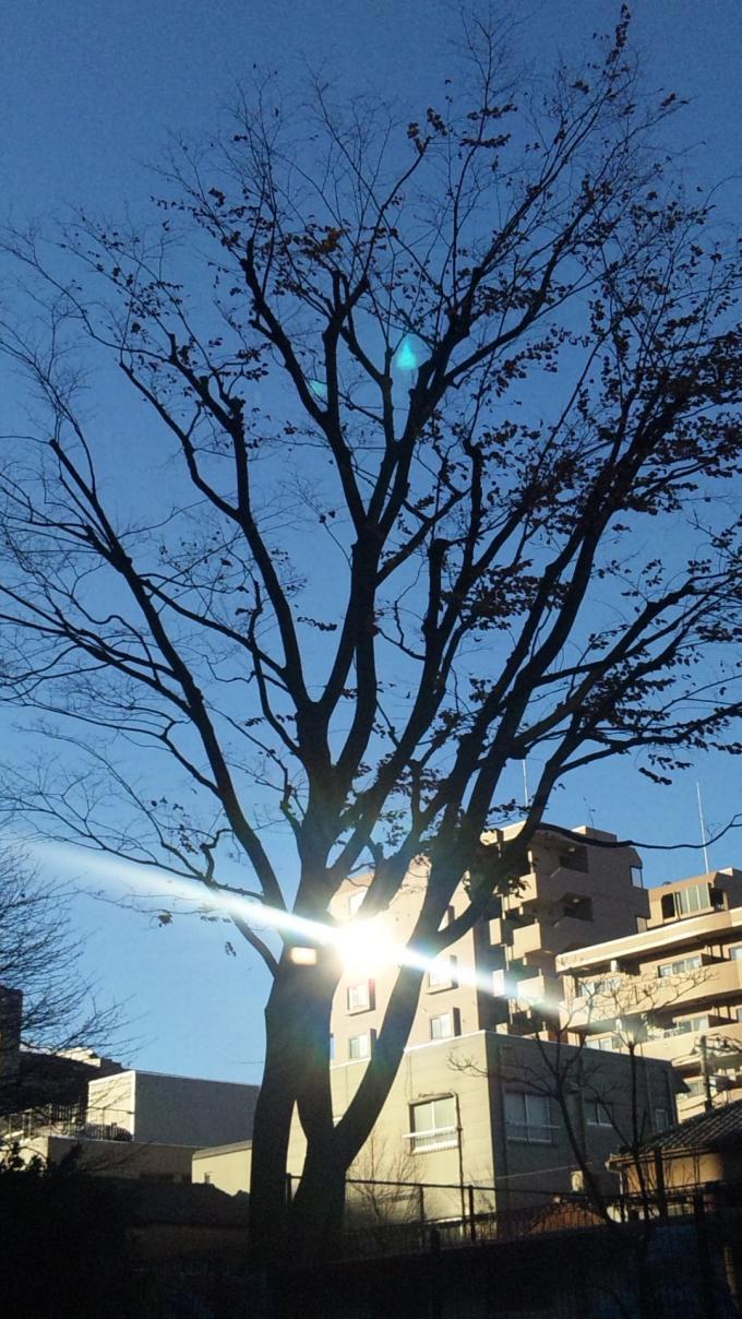 朝_20101225