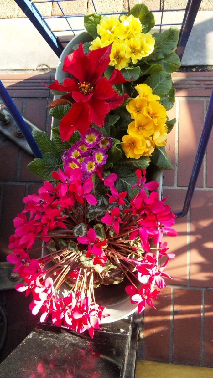 Flowers_20101228