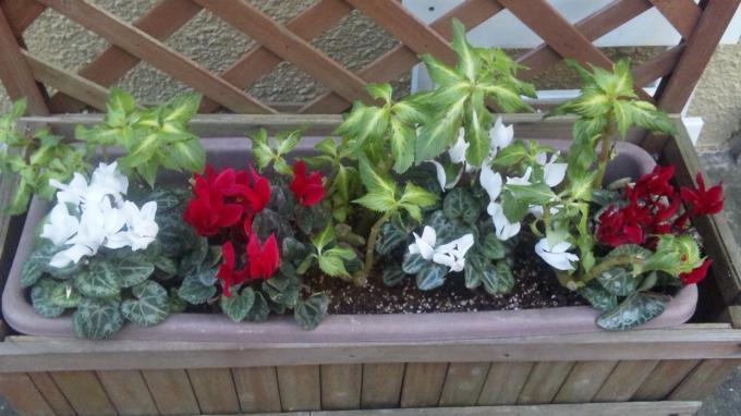 Flowers_002_convert_20110102181043[1]