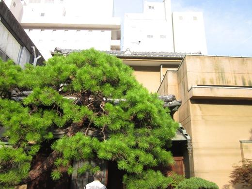 yamawayo1.jpg