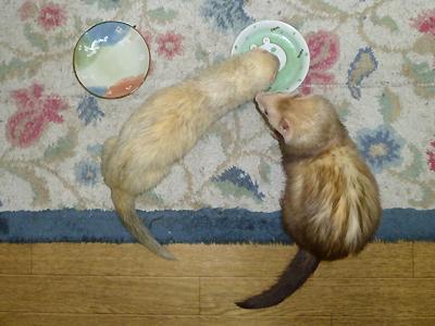 『こっちもイタダキ~♪』『あっちもおいしいものが入ってるのかな?』