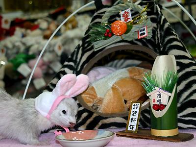 『ウサギと言えば、ワ・タ・シ!』
