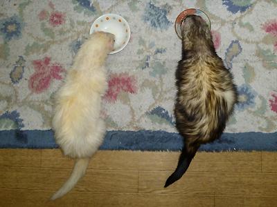 『ウマウマ~♪ 隣のは何だろう・・・』『ウマウマ~♪ 隣のも食べるぜ・・・』