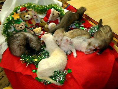 ウマウマ Merry Christmas 2010