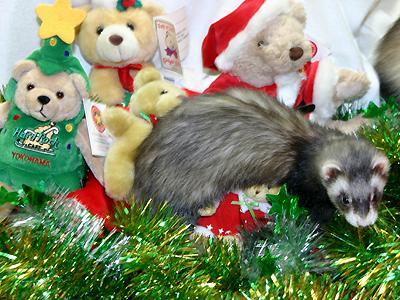 『クリスマスはね、騒ぐのが楽しいのよ!』