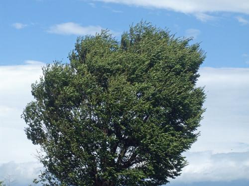 爆風のシンボルツリー