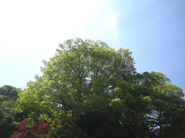 宝山寺04