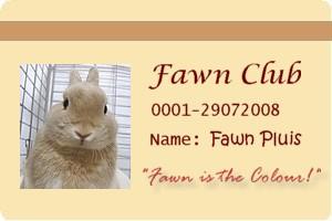 fawn2.jpg