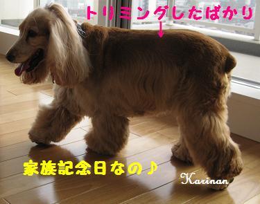 ブログ 11.10 ①  IMG_4068