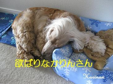 ブログ 9.7 ② IMG_7444