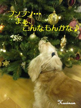 ブログ 12.5 ① IMG_8607