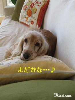 ブログ 12.5 ④  IMG_8615