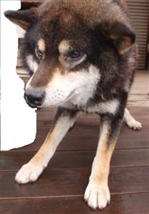 2011-07-0036_01.jpg