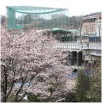 桜電車若葉台