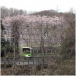 桜電車坂浜