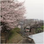 桜電車稲城