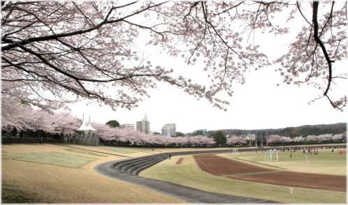 桜稲城中央
