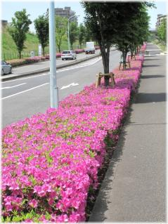 ピンクの歩道110514G 038